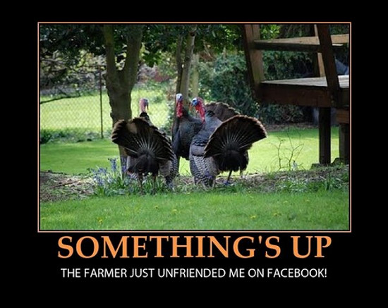 funniest thanksgiving memes 2016