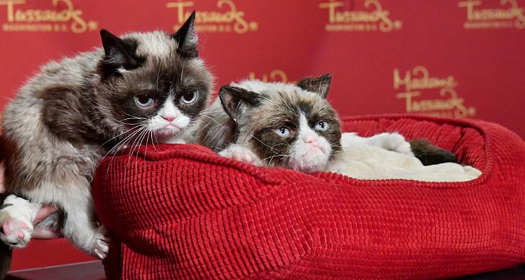 Grumpy Cat Christmas Memes