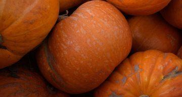 Pumpkin Patch Near Me