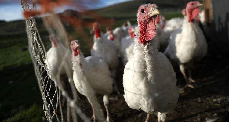 Free Turkey for Thanksgiving Near Me: Get a Free Turkey at These Grocery Stores