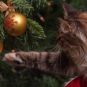 Christmas Memes Cats.Christmas Cat Memes 2017 Wishing Everyone A Meowsy Catmas