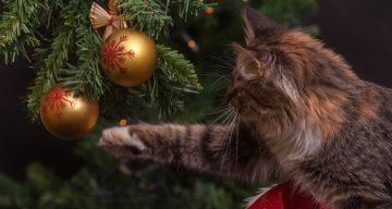 Christmas Cat memes