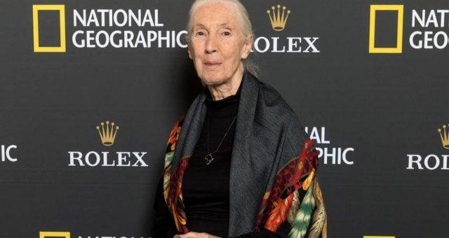 Jane Goodall's husband