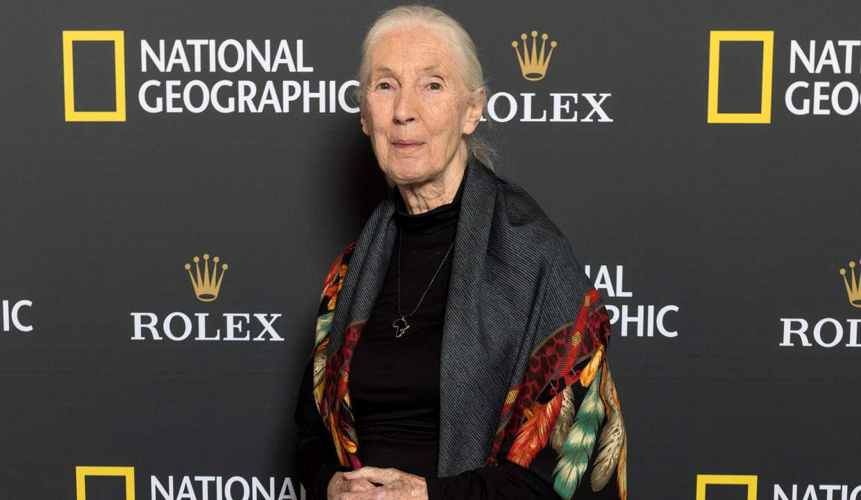 Jane Goodall's husband