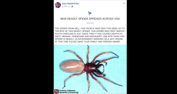 New Deadly Spider in the USA
