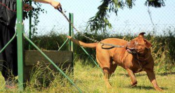 Jas Leverette Canine Intervention
